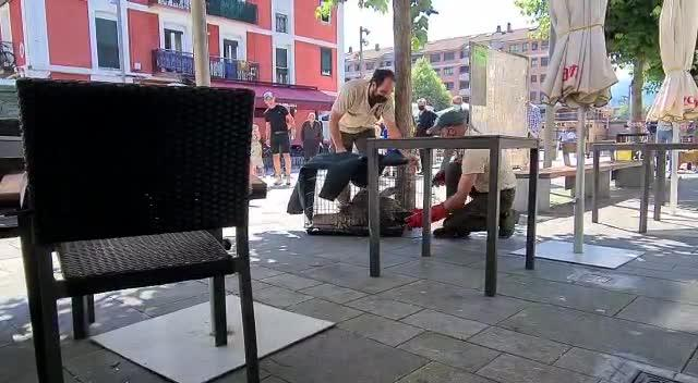 Putrekumea agertu zen ezustean Bideluze plazako terraza batean