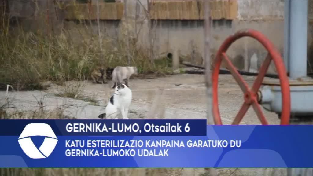KATU ESTERILIZAZIO KANPAINA GARATUKO DU GERNIKA-LUMOKO UDALAK
