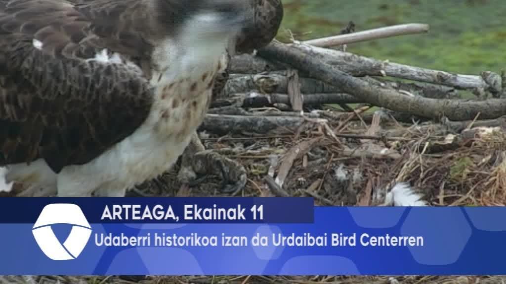Udaberri Historikoa izan da Urdaibai Bird Centerren