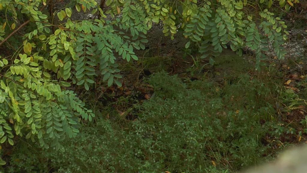 Armeria plazaren inguruan ibaira hondakinak botatzen direla salatu du Eguzki Talde Ekologistak